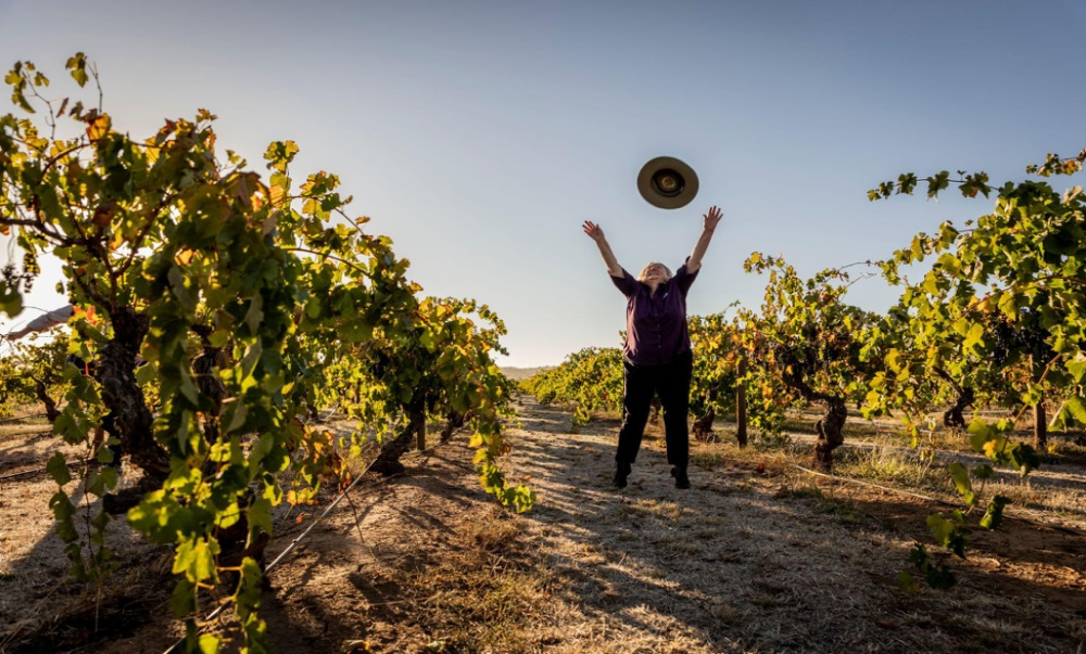 Levrier by Jo Irvine Wins at London Wine Competition