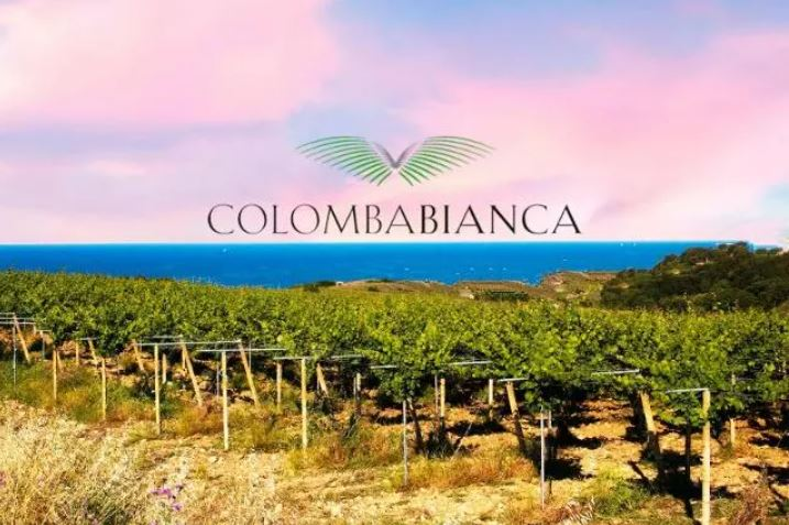 """Colomba Bianca wines awarded at the """"London Wine Competition 2021"""""""