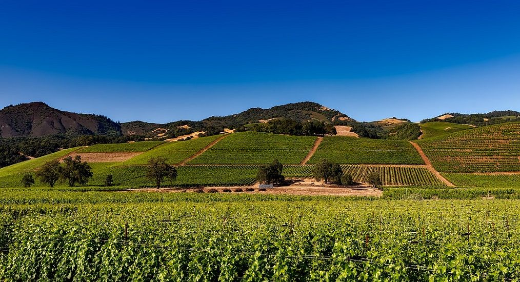 Photo for: Napa Valley